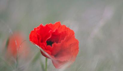 ANZAC Day Service - Linkwater image
