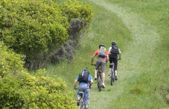Marlborough Sounds Adventure Bike Queen Charlotte Track