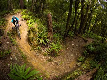 Mountain bike through stunning native bush along Marlborough's Wakamarina Track. Photo: Caleb Smith