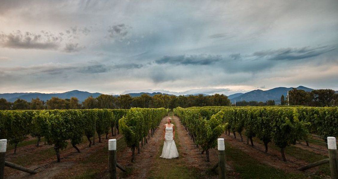 Wedding in vines