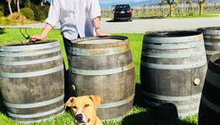 Jimmy's Classic Marlborough Wine tours  image