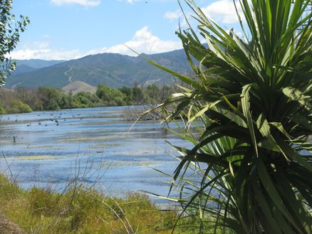 Marlborough's precious wetlands habitat in New Zealand
