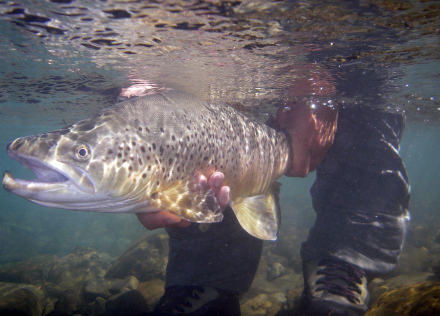 Freshwater Fishing | Marlborough NZ