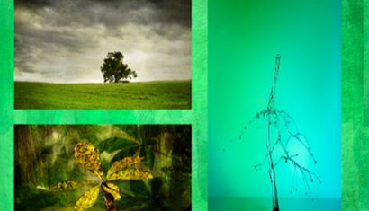 Wall Of Green Photographic Exhibition image