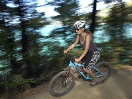 Mountain bike New Zealand's Queen Charlotte Track in the Marlborough Sounds