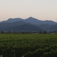Mount Riley Wines image