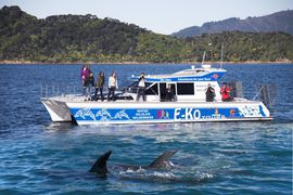 Cruise with dolphins