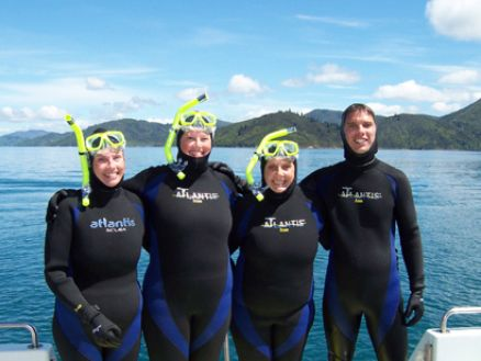 Swimming with dolphins in the Marlborough Sounds