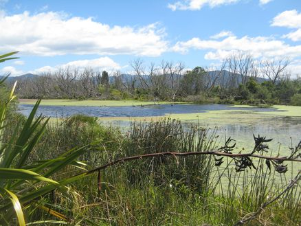 Grovetown Lagoon in Marlborough, New Zealand