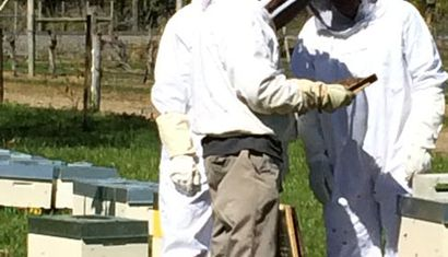 Beginners Bee Keeping Course image