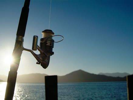Check the fishing rules for Marlborough before you go fishing
