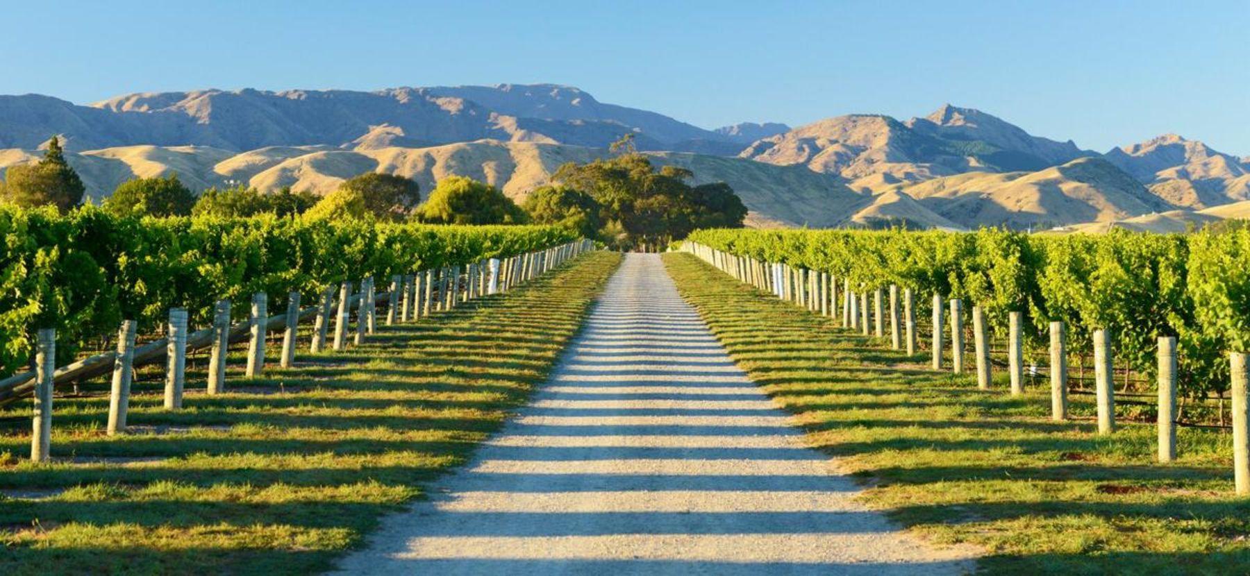 New Zealand Wine Blenheim Tours
