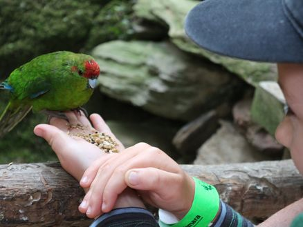 Feeding native kakariki at Lochmara Lodge in New Zealand's Marlborough Sounds