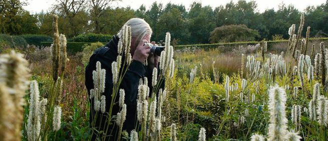 Five Seasons: The Gardens of Piet Oudolf image