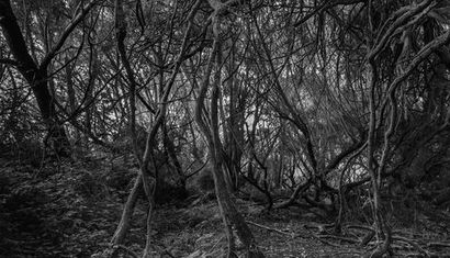 Knox & Tannock - Digital Undergrowth image