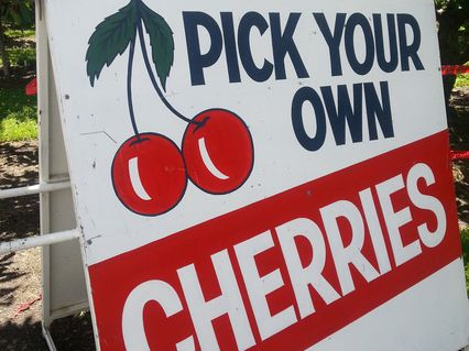 Buy cherries at a roadside stall