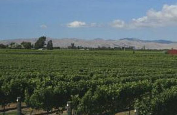 Korohi Vineyard image