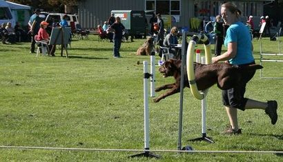 Blenheim Canine Training Club Agility/Jumpers Champ Show image