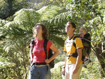 Walking through New Zealand native forest along the Queen Charlotte Track in Marlborough
