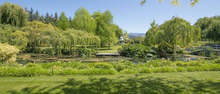 Rapaura Springs Garden Marlborough 2019 image