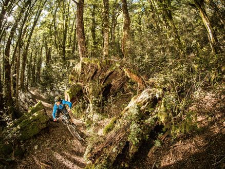 Marlborough's Wakamarina Track has been described as one of New Zealand's and the world's greatest natural mountain bike trails. Photo: Caleb Smith