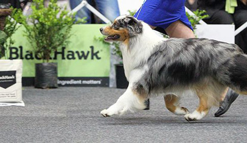 2019 Black Hawk National Dog Show image
