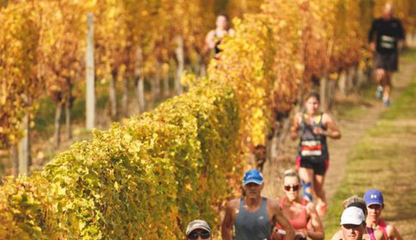 Saint Clair Vineyard Half Marathon image